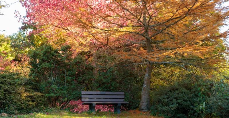 Autumn colour at Furzey Gardens