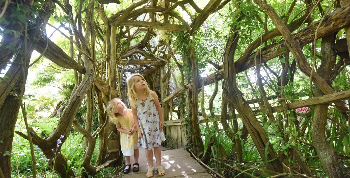 Wisteria Walkway at Furzey Gardens