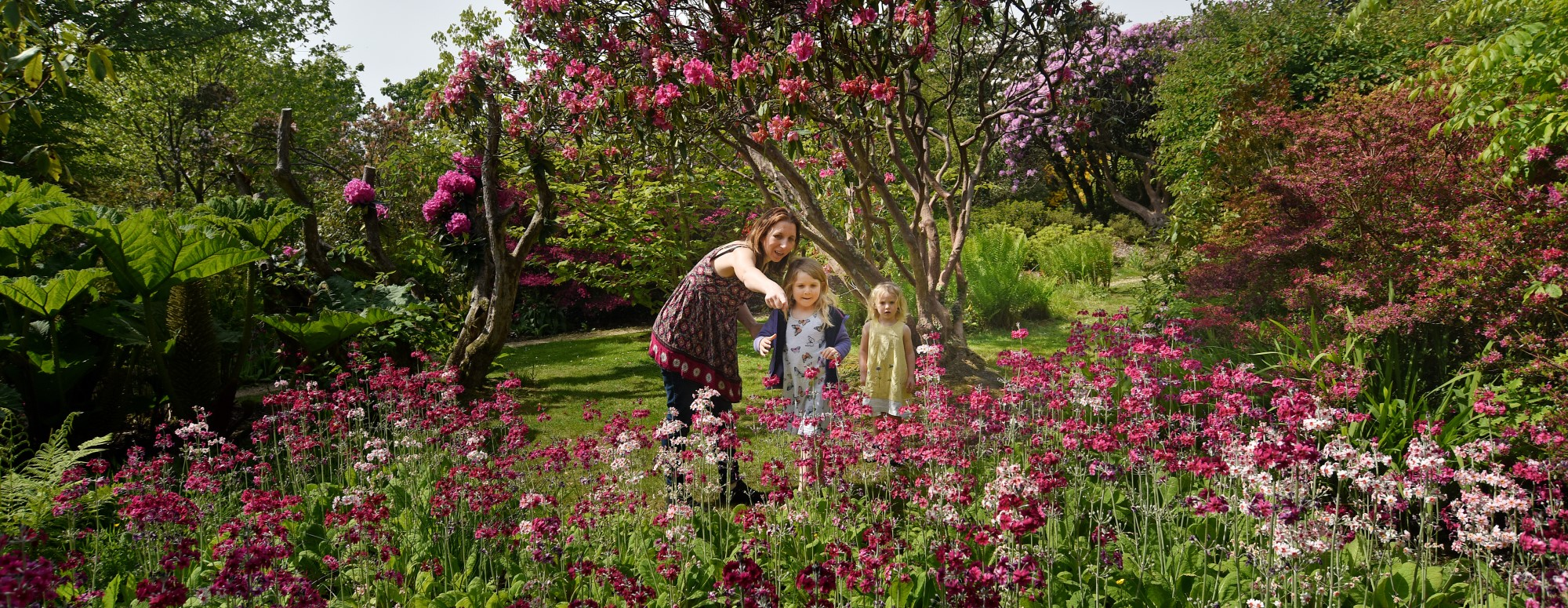 Family looking at Primula at Furzey Gardens