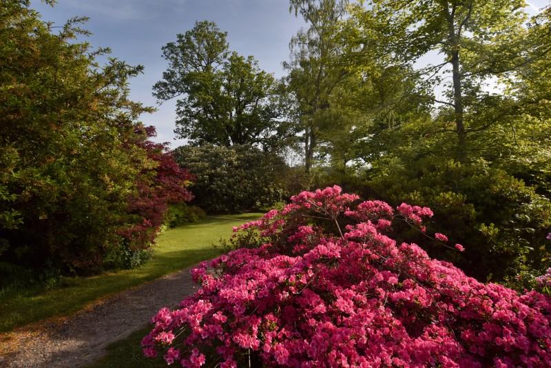 Spring colour at Furzey Gardens