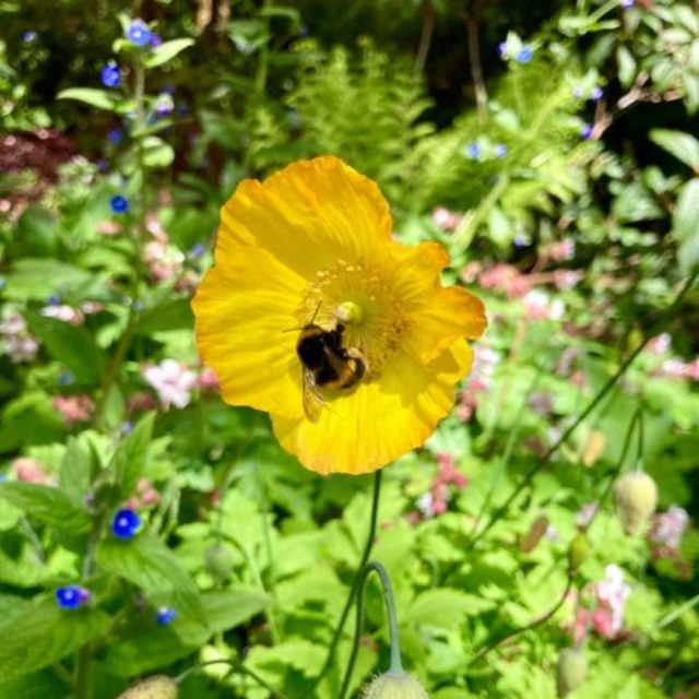 This week is #BeesNeedsWeek which helps to promote and raise awareness of Bees!  We would love for you to share how you help bees in your outdoor space whether this is a local park, allotment or your own garden.   #beethechange #bees #flowers #beekind #pollinator #allotment #gardens #helpthebees #gardens #bumblebee #busybees