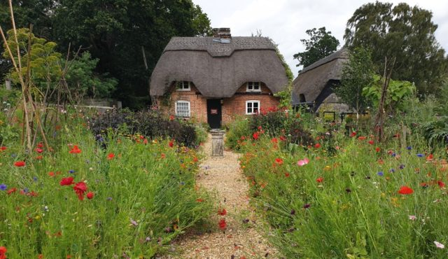 The cottage garden is a glorious burst of colour at the moment.   Find out what else you should look out for on a visit to Furzey Gardens this month. https://www.minsteadtrust.org.uk/charity/blogs/july-at-furzey-gardens/