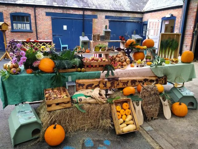 Happy harvest day from new forest day opportunities 🏵️🎃🌽