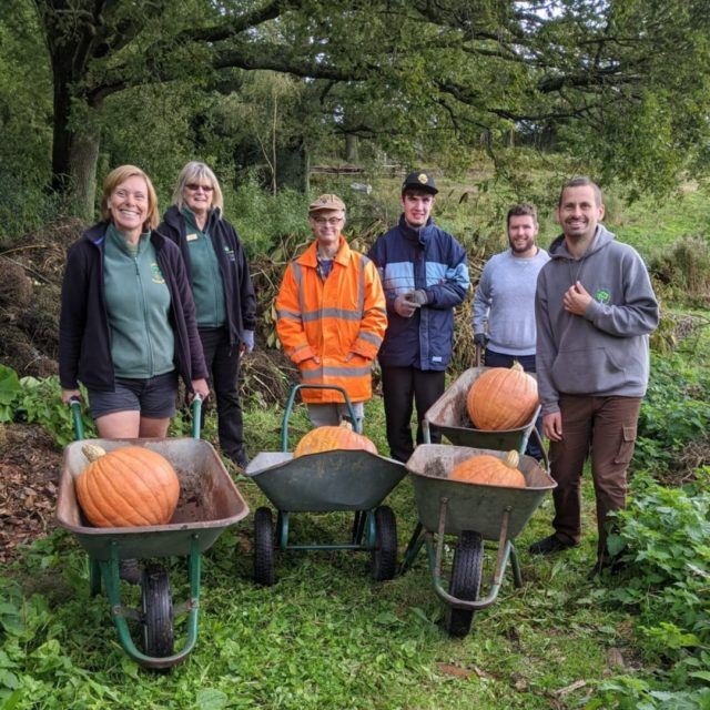 Pumpkin harvest at Furzey Gardens.   Look at these impressive pumpkins grown onsite at Furzey Gardens, harvested last week by Kevin, Fraser and Joe.   #pumpkintime #supportingpeoplewithlearningdisabilities #harvestcelebrations #gardensofinstagram #thenewforest
