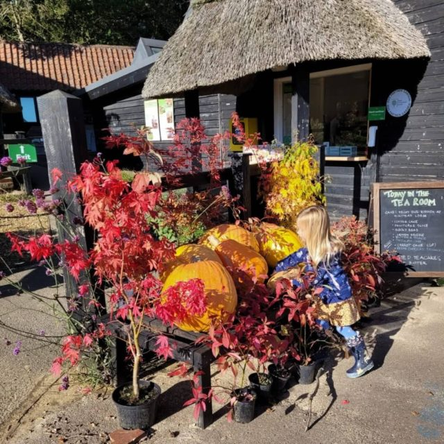 Colourful autumnal displays at Furzey Gardens.   Book your ticket for a visit this half term and search for fairy doors, crunch through autumn leaves and enjoy the wonderful colour of nature.   www.furzey-gardens.org